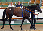 Gross Rises at Tattersalls July Sale