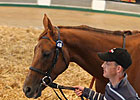 Time Machine Sets Pace at Tattersalls