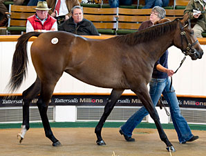 Another Galileo Filly Shines at Tattersalls