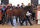Book 3 at Tattersalls Yearling Sale Begins