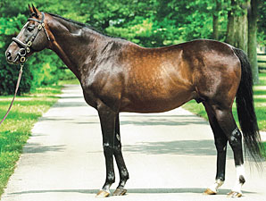 Theatrical, Champion and Leading Sire, Dies
