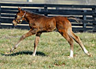 Rachel Alexandra and Her Foal (Blog)