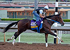 Asmussen Aims to Make Untapable Feel at Home