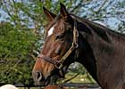 Zenyatta's Dam in Foal to 'Henry'
