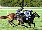 Evenly Matched Pair for Trainer Stidham