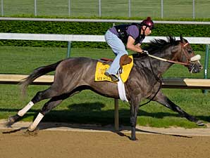 Win Willy Preps for Kentucky Derby