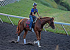 Wise Dan Continues Comeback at Keeneland