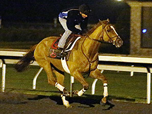 Wise Dan Set to Return in Maker's 46 Mile
