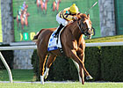 Wise Dan's Travel Plans Delayed
