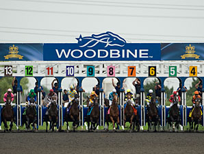 Woodbine Has Per-Card Wagering Rise in 2013