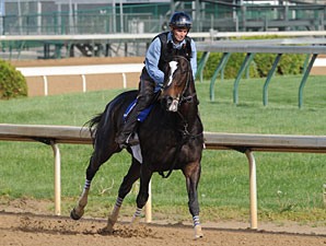 Zenyatta May Not Run on Oaks Undercard