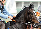 Zenyatta Scratched From Louisville Distaff