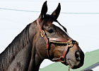 Slideshow: Zenyatta Arrives at Churchill
