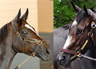 Change in Horse of the Year Voting Rejected