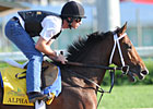 Alpha Will Take Pass on Belmont Stakes