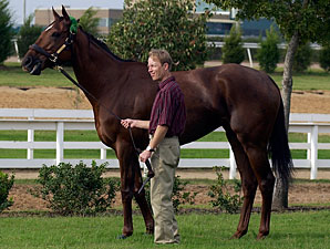 Azeri, Point Ashley Produce Fillies