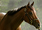 Decision on Barbaro's Ashes Close