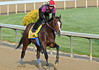 Bodemeister Drills 5 Furlongs at Churchill
