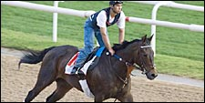 Brass Hat on Track in Dubai