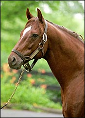 Former American Stallion Coronado's Quest Dies in Japan