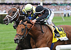 Desert Blanc Retired After Tendon Injury