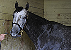 Frosted Scheduled for Belmont Stakes Run