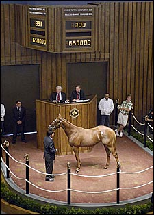 Giant's Causeway Colt Sets Off Fireworks at Fasig-Tipton With $650,000 Price