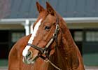 Derby Winner Genuine Risk Dies