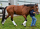Goldencents Arrives at Pimlico