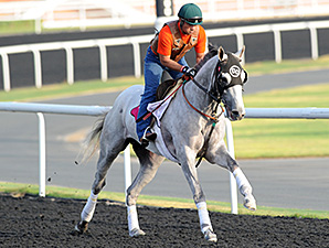 He's Had Enough, Dice Flavor Try UAE Derby