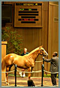 Keeneland July Sale: Stumble at the Start