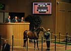 $1.1-Million Filly Resold Privately