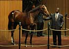 A.P. Indy Filly Brings $1 Million