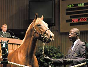 Keeneland September Sale Has 4,857 Yearlings