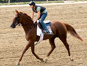 First Preakness Contender Hits Pimlico
