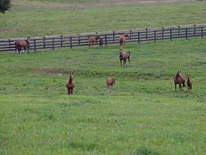Report of Mares Bred Shows Continued Declines
