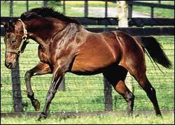 From the Print Edition: Mr. P's Influence Widens With New Sires of 2002