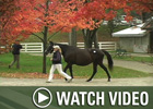 Video: Keeneland Nov - Day 10 Wrap