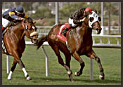 Hollywood Park Race Report: Night Star