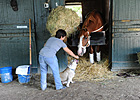 Slideshow: Shackleford