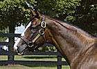 First Stakes Winner for Freshman Sire Sligo Bay