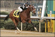 Teuflesberg Out of Preakness, Trainer Says