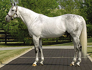 Unbridled's Song's Fee $85,000 at Taylor Made