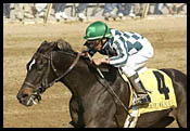 Grade I Winner Victory Ride Retired/Going to Storm Cat