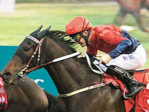 Viva Pataca Wins Hong Kong Gold Cup