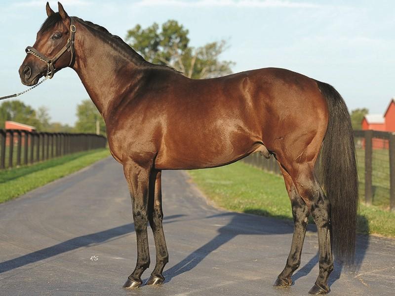 Majestic Harbor Stallion Register Online