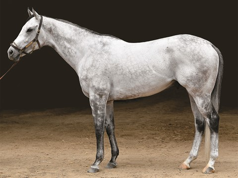 f5ad4418563a Kobe s Back - Stallion Register Online